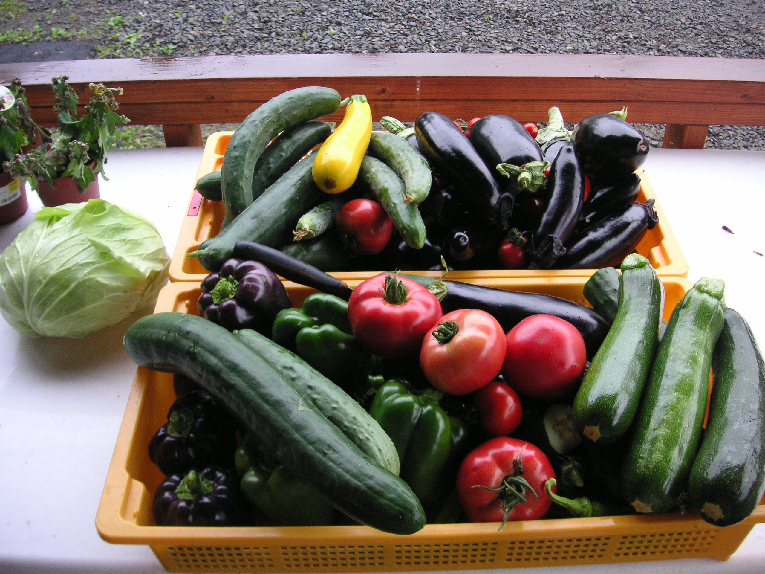 個別指導塾YSPの体験学習「収穫体験・大地の力に感動!」