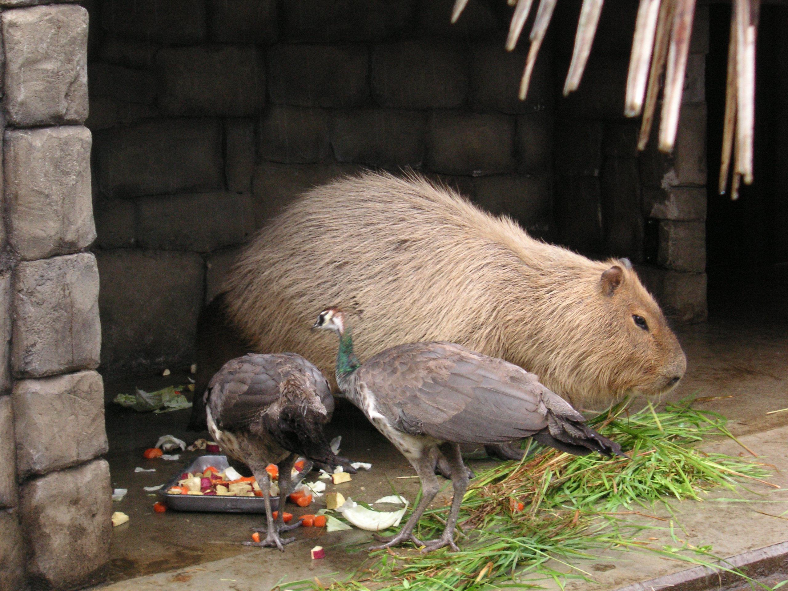 個別指導塾YSPの体験学習「動物たちといつも一緒!命の尊さ暖かさ体験します」